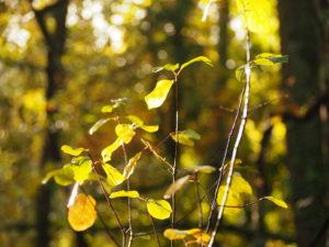 bain-de-forêt-arbres-feuilles-lumière-arcachon-